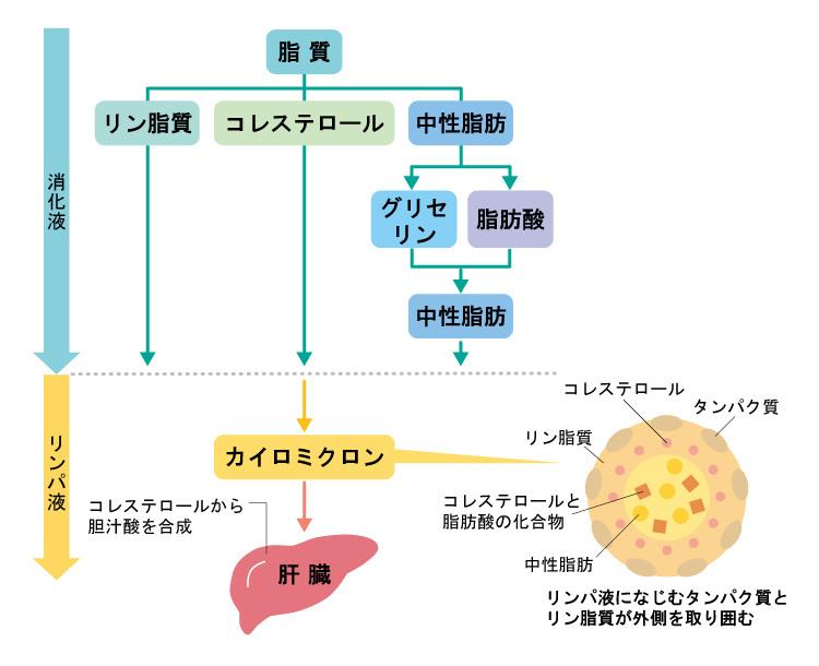 脂質の代謝
